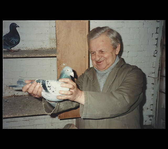 Louis was always so proud of their pigeons, handing over the famous 019 for me to handle.