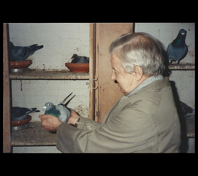 Louis handing me the famous SCHOUWMAN (Belg 6371905-76) in their breeding loft.  Later this pigeon was given to Henk Kuylaars as a present.